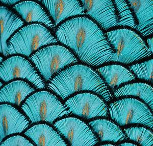 Inspiration illusion deco plumes paon