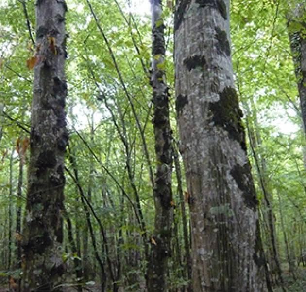 Laatste nieuws milieu samenwerking Balsan-ONF plaatselijk bos
