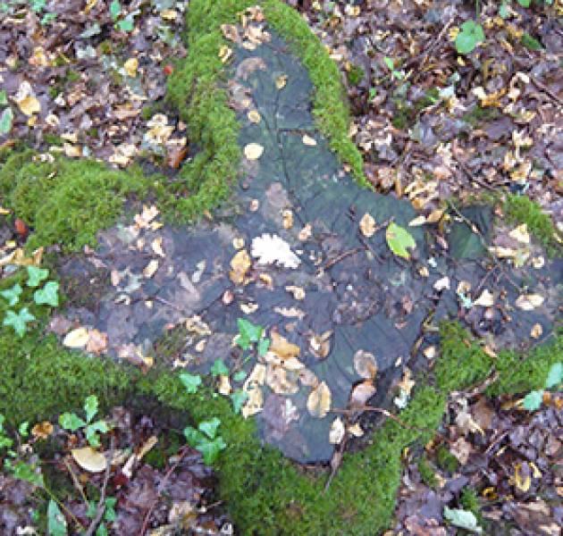 Laatste nieuws milieu samenwerking Balsan-ONF bos stronken