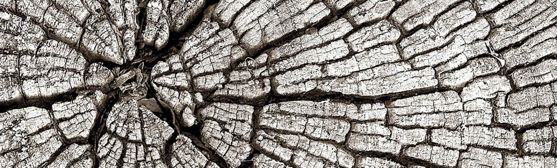 Inspiration ciel terre deco arbrecoupe
