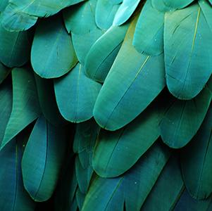 plumes-bleu-vert