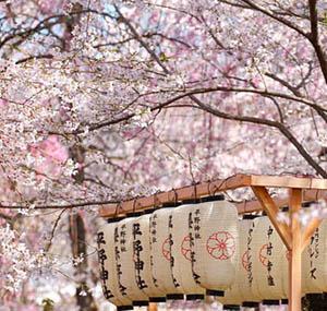 Inspiration deco fleurs cerisier japon