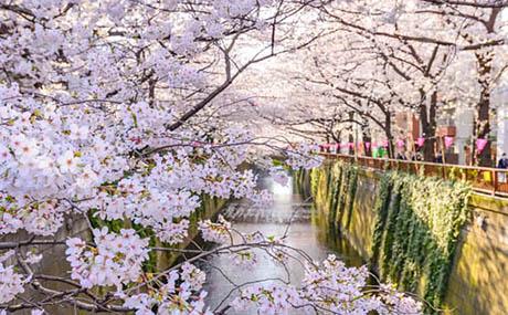 Inspiration deco fleurs riviere