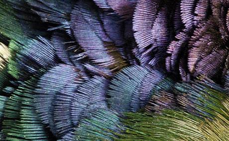 Inspiration illusion deco plumes macro