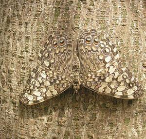 Inspiration illusion deco papillon